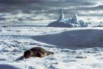 gurun antartika
