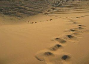 gurun turkestan