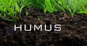 tanah humus