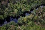 Hutan Rawa Gambut