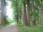 Hutan Lindung Alas Kethu